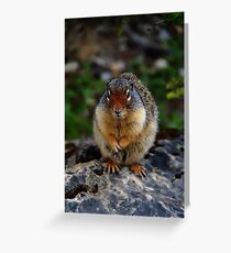 Richardson Ground Squirrel Greeting Card