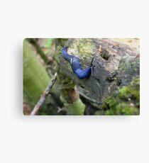 blue slug Canvas Print