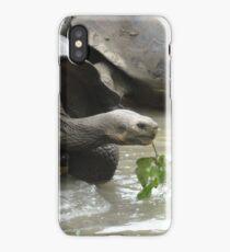 Galapagos turtule, Galapagos tortoise iPhone Case/Skin
