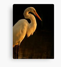 White Bird Canvas Print