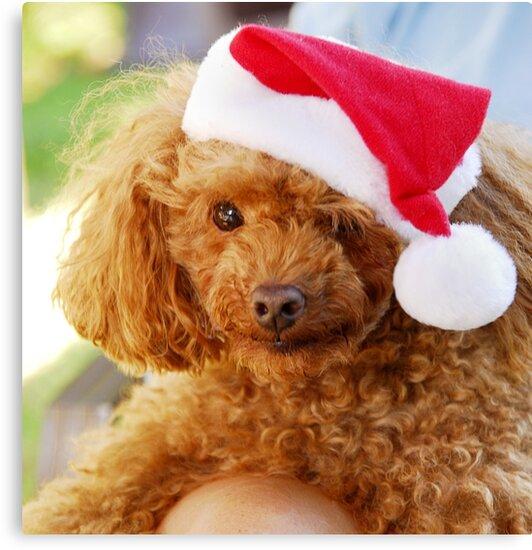 Santa's helper by triciamary