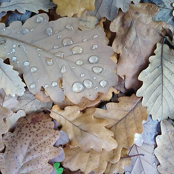 Oak Leaves with Water Droplets by synthmax