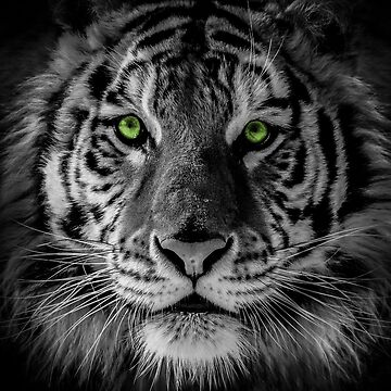 Green Tiger A by alanwigg