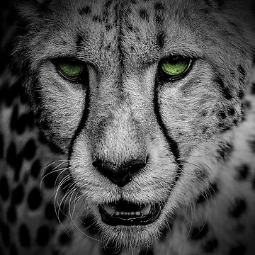 Green Cheetah A by alanwigg