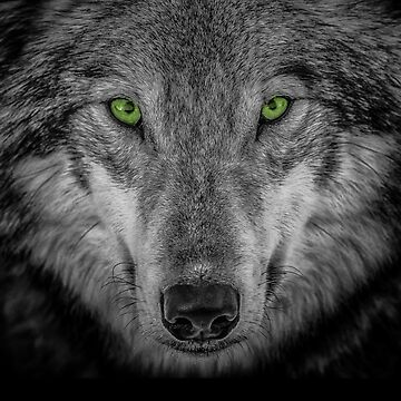 Green Wolf A by alanwigg