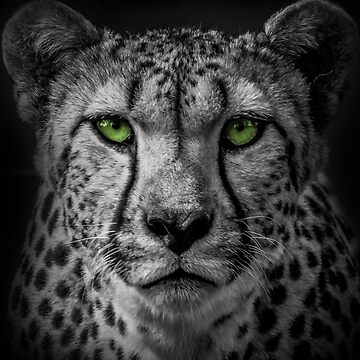 Green Cheetah B by alanwigg