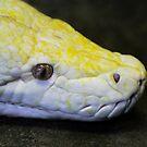 A Perfect Python by Heather Friedman