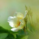 """ I am a Rose "" by Brian Bo Mei"