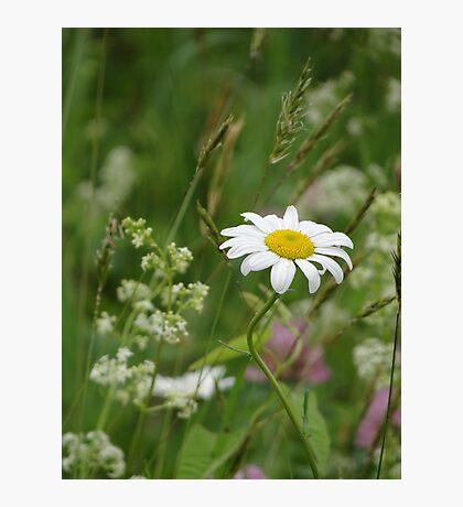 wild flowers 3 Photographic Print