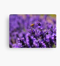 Field day Canvas Print