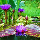 Summer Lily Pond by INA Heinz