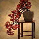 Bonsai Beauty by Jessica Jenney