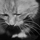 Fine Art Feline by Jen Waltmon