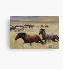 Stallion Chase Canvas Print
