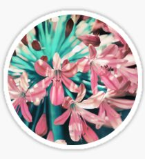 Sunny Agapanthus Flower in Pink & Teal Sticker