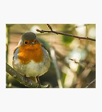 Robins rule Photographic Print