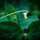 Light Bulb by Natashia Lee