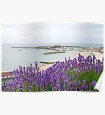 Lyme In Lavender  Poster