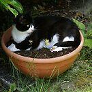 Cat in Flower Basin by Gilberte