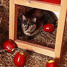 Cat in a Barn by Dagoth