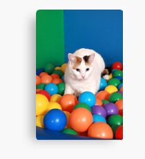 Cat Playing in balls Canvas Print