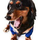 Happy Dog in T-Shirt by Dagoth