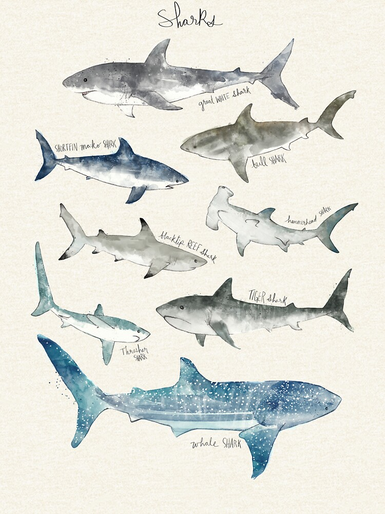 Sharks - Landscape Format by AmyHamilton
