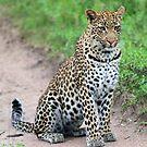 The beautiful Tutlwa female by jozi1