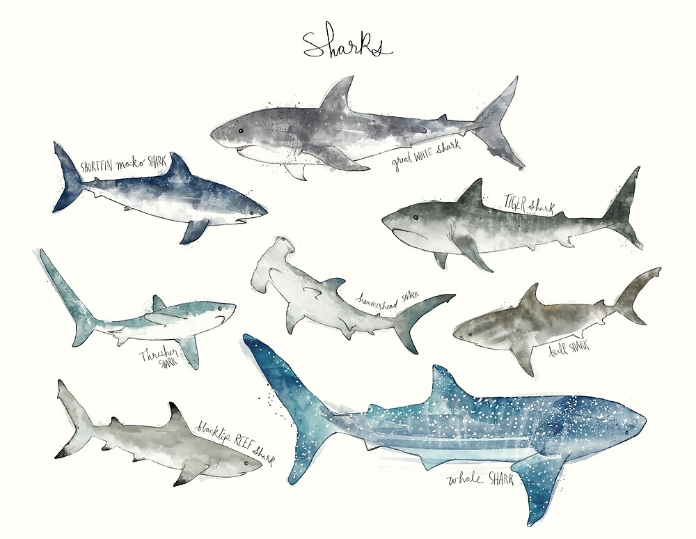 Sharks - Landscape Format by Amy Hamilton