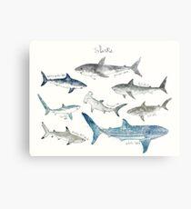 Sharks - Landscape Format Metal Print