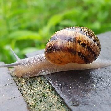 Snail by Sheepandwolf