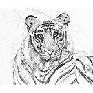 A tiger I see, Looking back at me by David M Scott