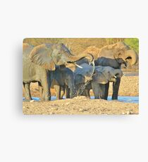 Elephant - Joy of Water - African Wildlife Background  Canvas Print