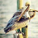 Pelican by Jonicool