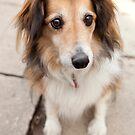 Big Puppy Eyes by Dagoth