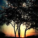 The Three Oaks by Jonicool