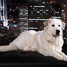 City Dog Watch by Dagoth