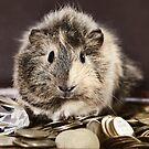 Rich Guinea Pig Pirate by Dagoth