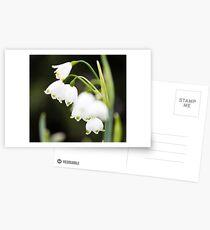Spring Snowflake - Leucojum vernum Postcards