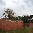 Nature Taking Over, Derelict Building. by Billlee