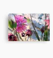 'Clementine Rose' Columbine on Last Day of Spring Canvas Print