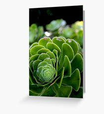 The Beauty of nature -Macro Greeting Card