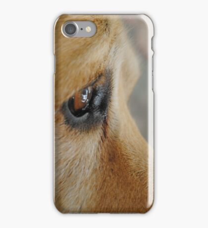 Staying Focused On A Goal- Bouncer The Labrador iPhone Case/Skin