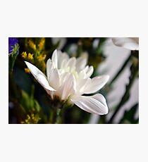 White flower macro. Photographic Print