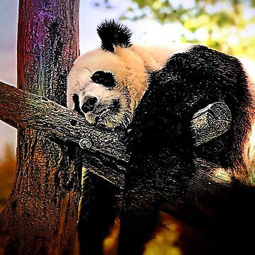 cool panda by theWurst