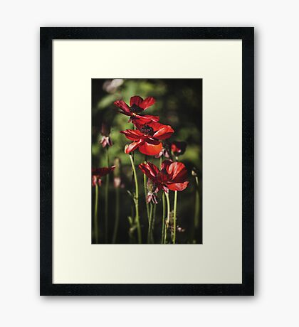 ~ field of poppies ~ Framed Print
