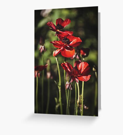~ field of poppies ~ Greeting Card