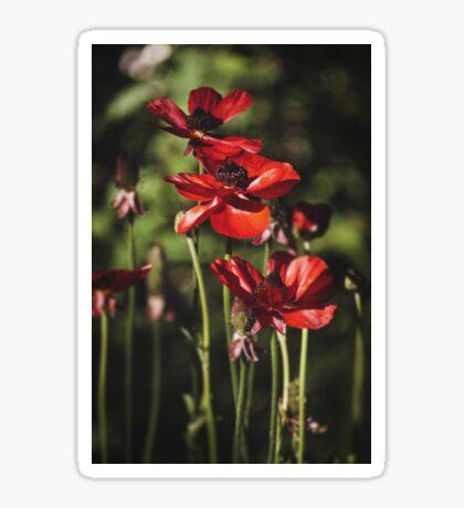 ~ field of poppies ~ Sticker