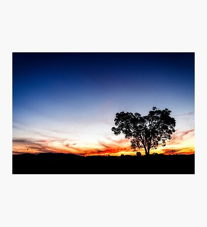 ~ the heart tree ~ Photographic Print