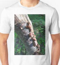 Peeling Bark T-Shirt
